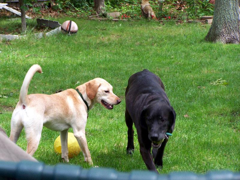 Boone & Charlie.