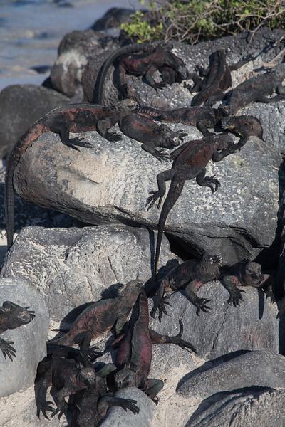 Galapagos_MG_4508.jpg
