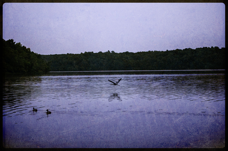 Blue Heron over water. Lake Jacomo, Blue Springs, Missouri.  Added texture layer.