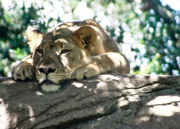 Zoo Trip 7-10-2010