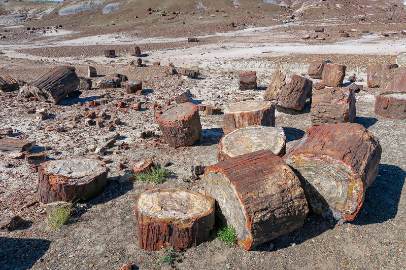 Petrified Forest National Park -- Crystal Forest Trail (4-15-17)