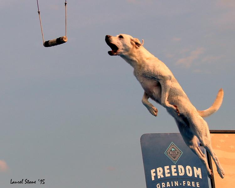 2015.8.21 Dock Dogs Lambeau-128.JPG