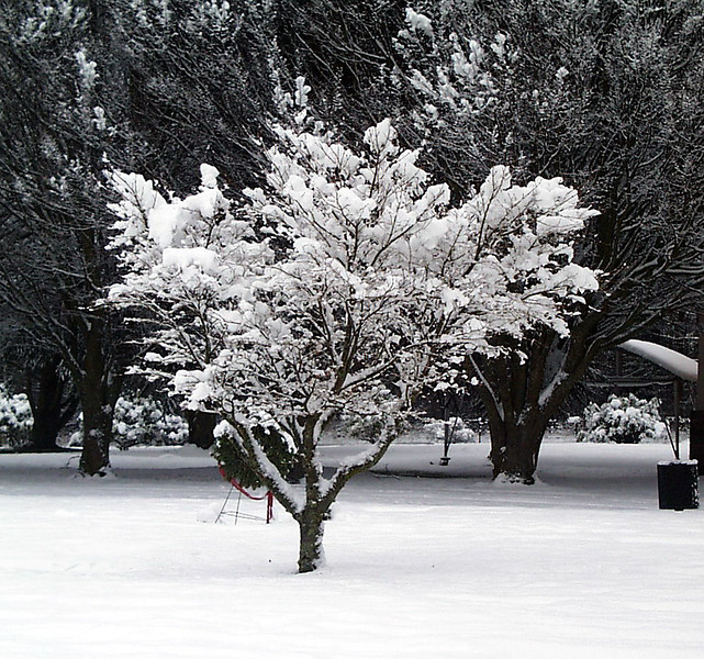 1-30-2002-snow#11.jpg