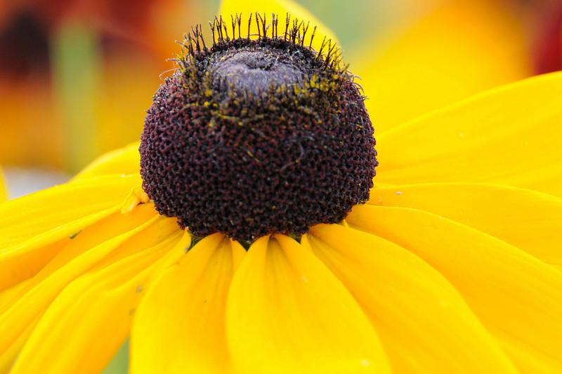 flowers_20080714-012.jpg