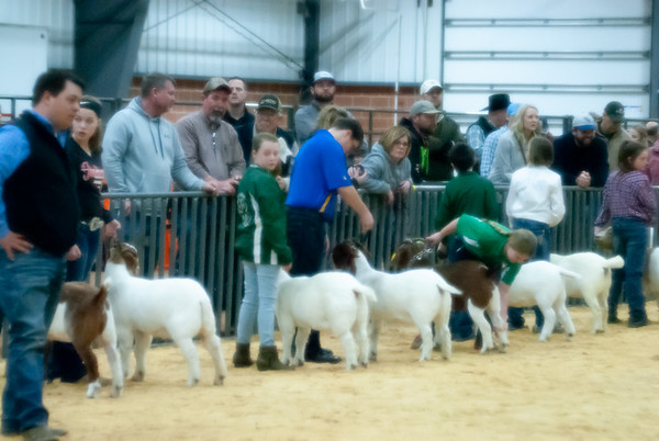 SW District Livestock Show 2019