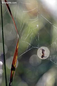 bb2_spider_2030_RT8.jpg