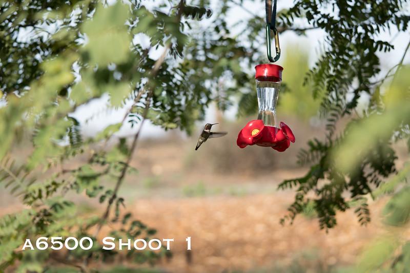 a6500 macro - Shoot 1-10.jpg