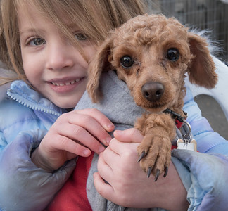RHR Korean Meat Trade Dog Rescue 12-13-2016
