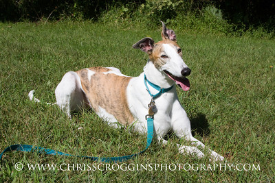 Greyhound Pets of America, Md.