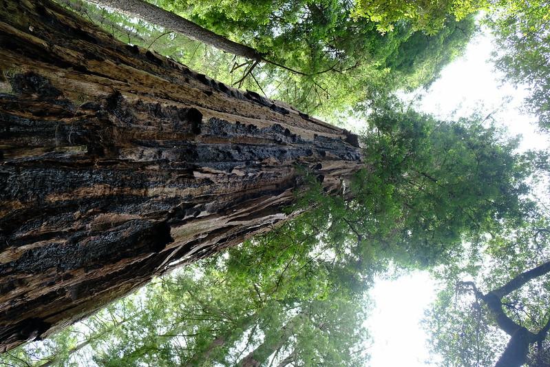 California Day 4 Big Basin 05-29-2017 79.JPG