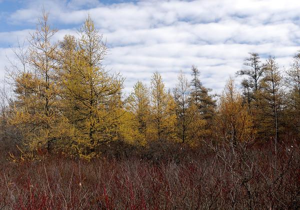 Bogs, Fens, Nature Preserves