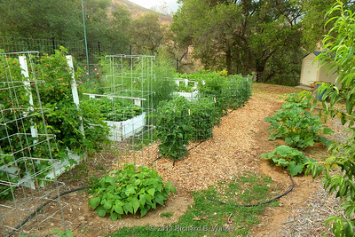 Building Vegetable Garden