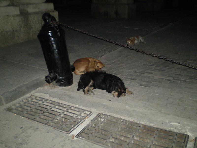 Dogs dogs everywhere - Elizabeth Yerkes