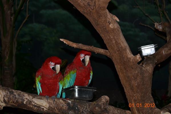 Brookfield Zoo Jan 1st 2012
