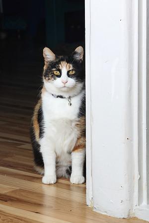Cats Meow Rescue
