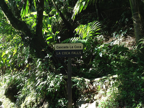 El Yunque National Forest