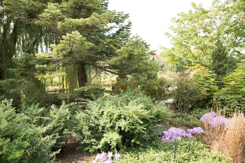 Chicago Botanic Garden 036.jpg