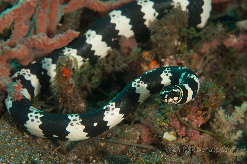 dumaguete-apo-island-diving-2017-divehappy-chris-mitchell-2.jpg