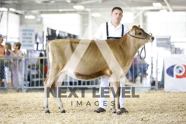 2106 Jersey Heifer Show