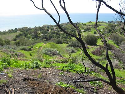 Toyon Trail -Palos Verdes 3/10