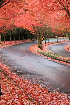 Landscapes around Oregon