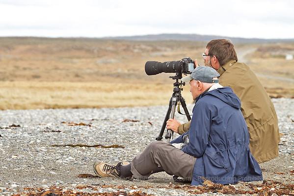 TDF001 King Penguins of Tierra del Fuego