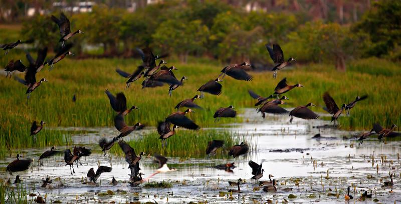 Birds Take off.jpg