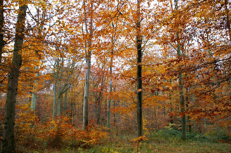 Kommunens skov på Trelde Næs november 2006
