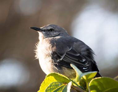 Road Scholar Cape May Birding October 2014