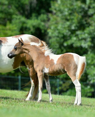 4. Weanling filly