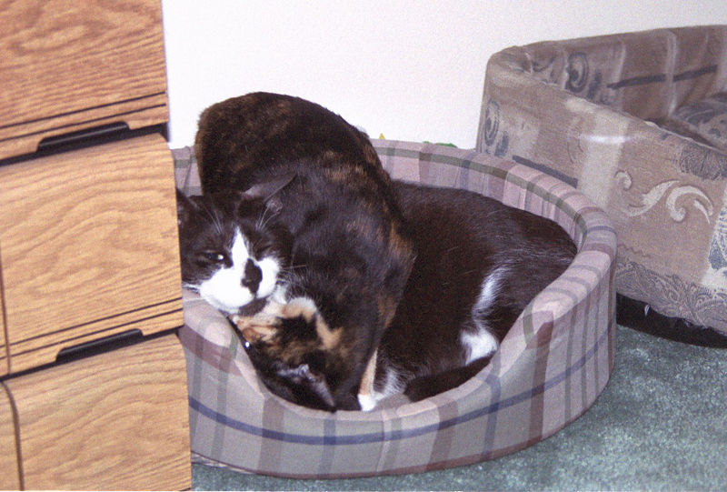 2003 12 - Cats 60.jpg