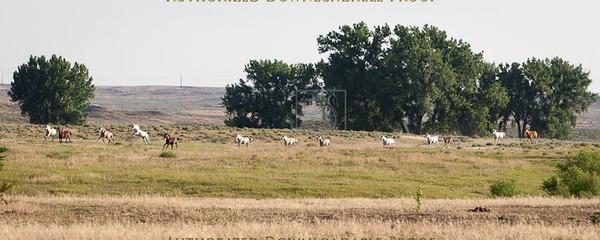 Ranch38-2590.jpg