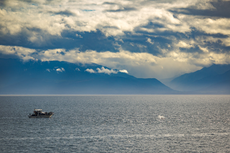 springtide orca 2.jpg