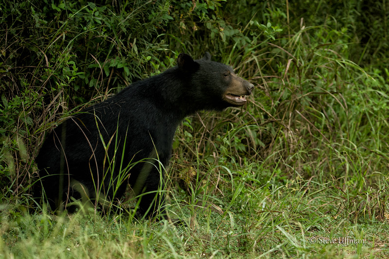 20140825-_G7Q9836Winter-Quarters-bears-Edit.jpg