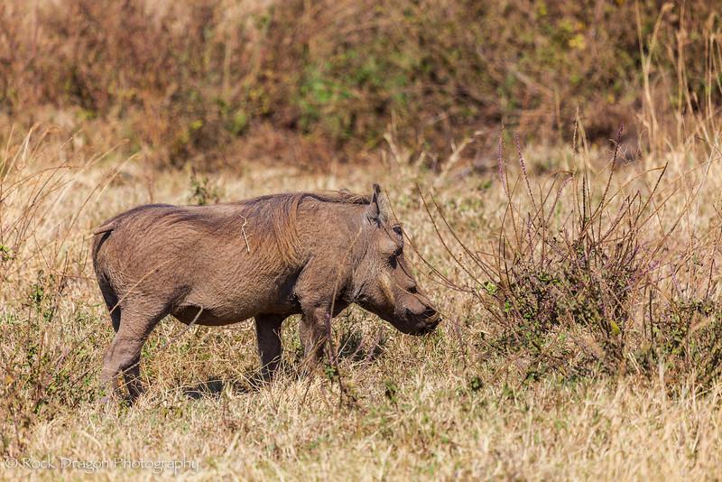 Ngorongoro-7.jpg