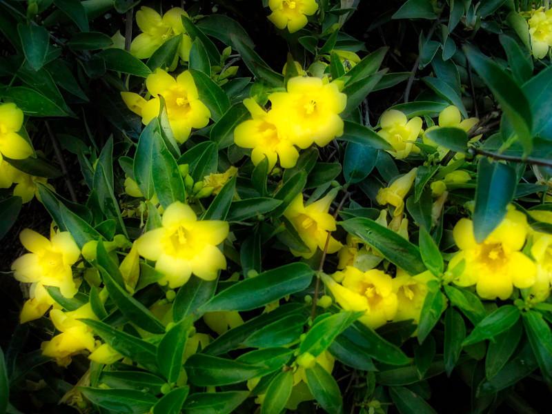 January 31 - Yellow flowers