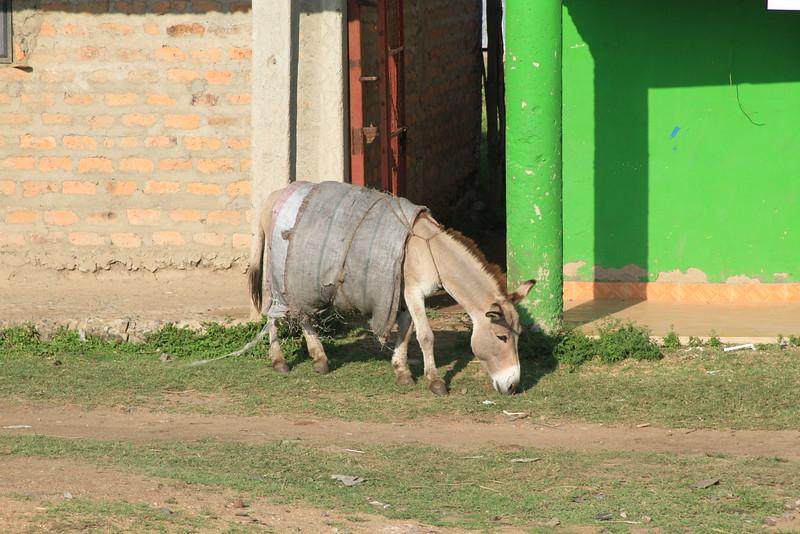 Kenya Part1 '15 2533.JPG