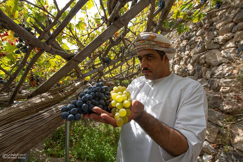 Grape - Wakan village - Nakhal225- Oman.jpg
