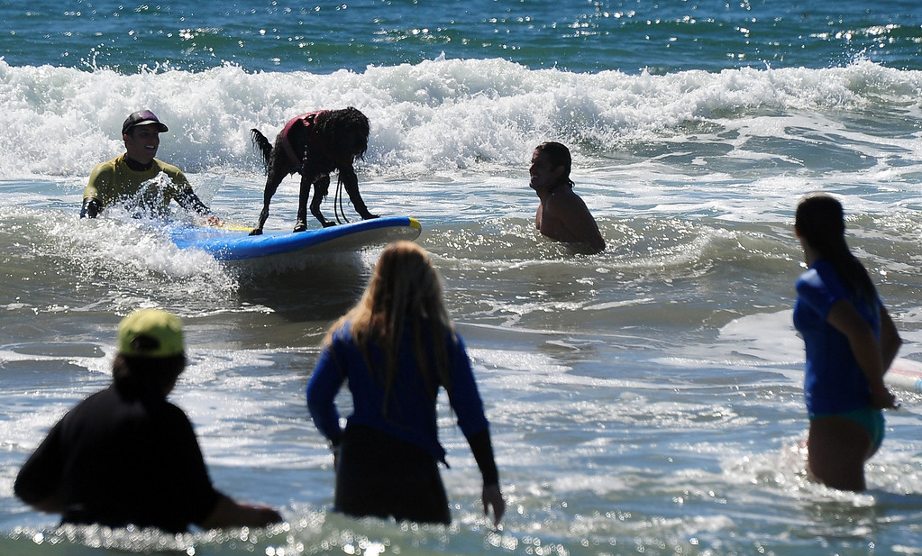 . People gathered to watch dogs surfing during the 5th Annual Surf Dog competition at Huntington Beach, California, on September 29, 2013.  AFP PHOTO/Frederic J. BROWN/AFP/Getty Images