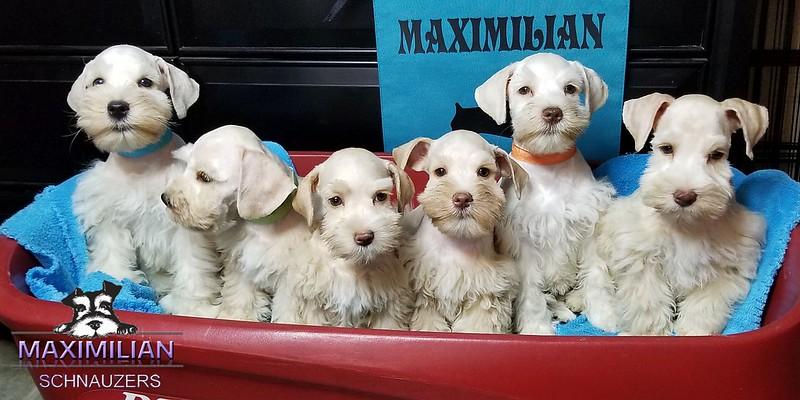 Bianca Pups 039.jpg