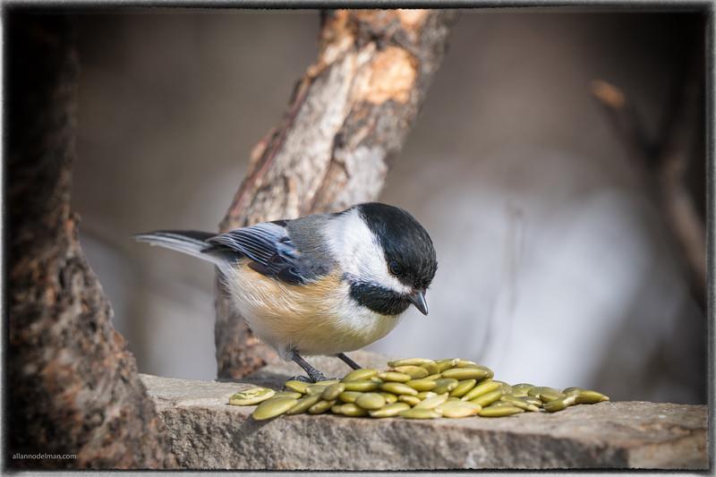 birdsml-5.jpg