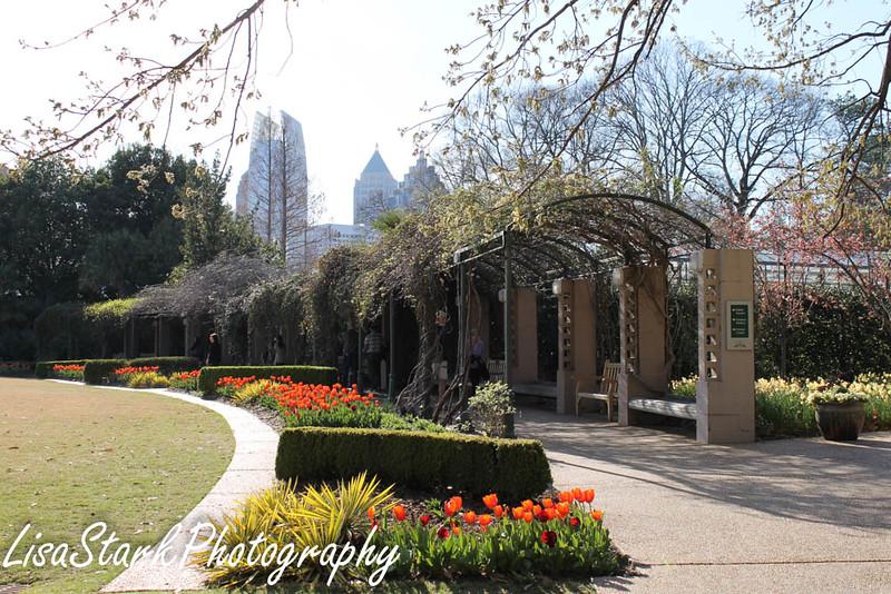 Atlanta Botanical Garden-8.jpg