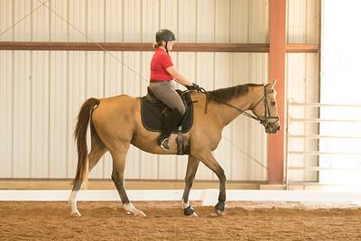 Horse 612