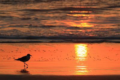 Daytona Beach Florida Sunrise