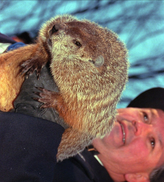 . Punxsutawney Phil, held by handler Bill Deeley, greets the estimated 25,000 faithful on Gobbler\'s Knob Sunday Feb. 2, 1997, in Punxsutawney, Pa. Phil didn\'t see his shadow Sunday morning, indicating spring is right around the corner. Legend has it that if the groundhog sees his shadow, six more weeks of winter lay ahead. (AP Photo/Gene J. Puskar)