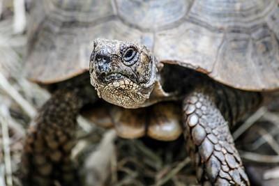 Turtles Park in Corsica