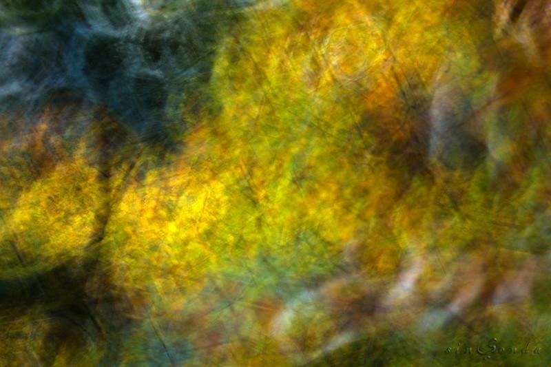 Espíritus del bosque. Ordesa VII