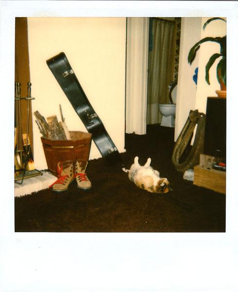 Polaroid_0075-XL.jpg