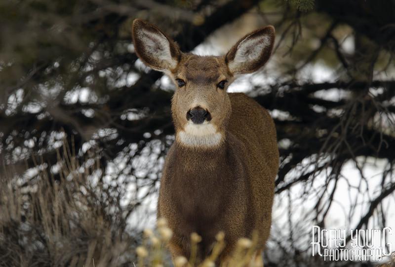 DeerPortraitA.jpg