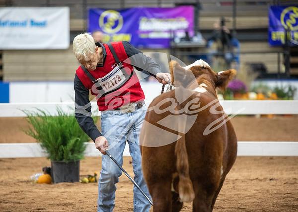 Bull Candids